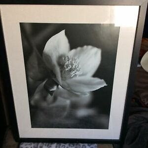 Black frame glass front IKEA Photo