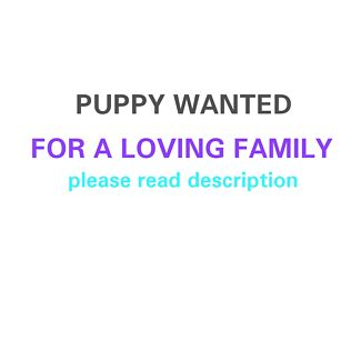 WANTED: Free to good home pup to loving home! Ferntree Gully Knox Area Preview