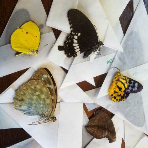 10 REAL butterflies from VIETNAM! Colorful, Tropical! Great for collections