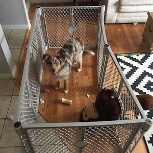 Dog cage (indoor)