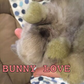 BUNNY LOVE- lots of beautiful baby bunnies. :))