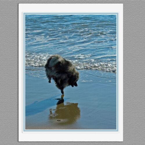 6 Keeshond Ballet Dog Blank Photo Art Note Greeting Cards