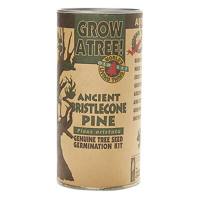 Ancient Bristlecone Pine | Tree Seed Grow Kit | The Jonsteen Company Grow Pine Tree
