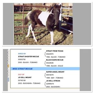 2011 papered mare