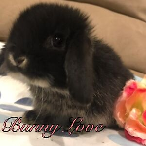 ❤️ 41 ADORABLE BABY BUNNY TAILS•••
