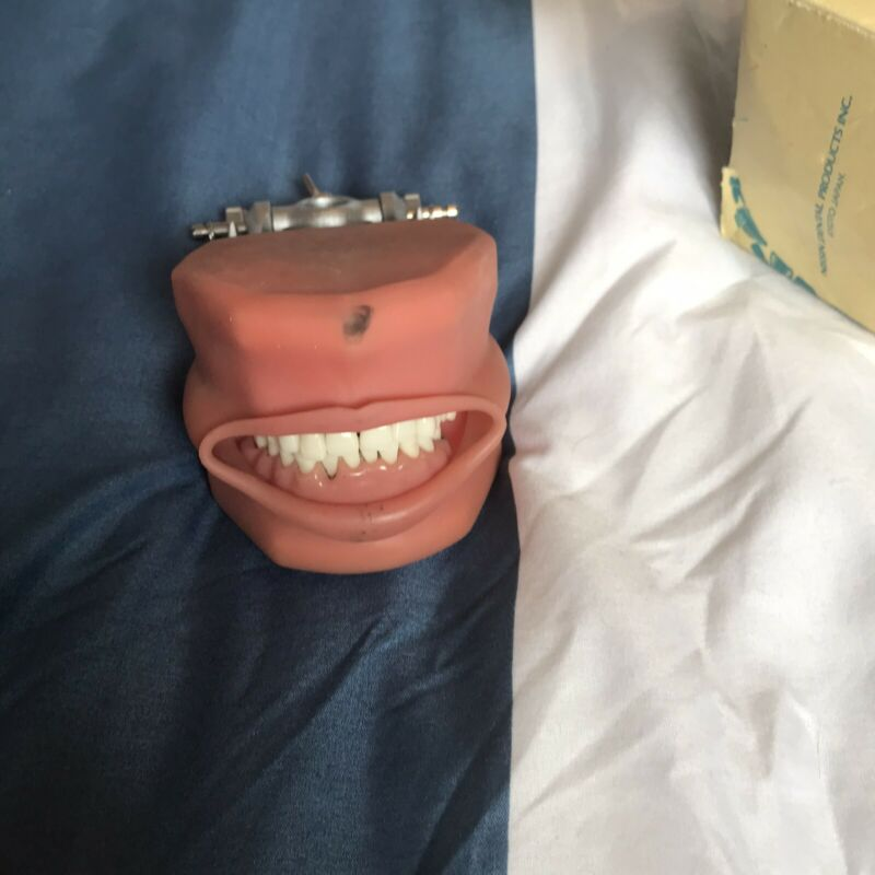 Typodont With Cheeks, Cavity And Recession Nissin Dental model