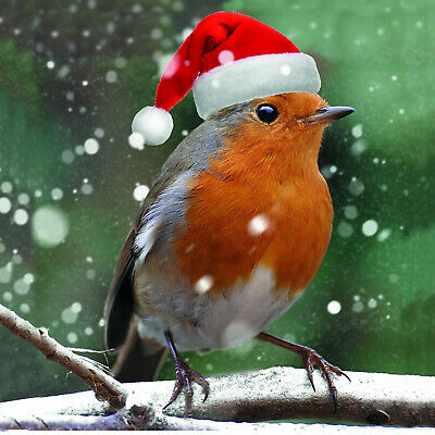 Charity Christmas Cards Willow Wood Hospice MERRY ROBIN Envelopes 10 Pk ()