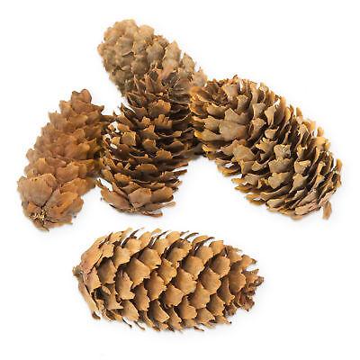 kleine Deko Tannenzapfen ca. 4-5cm im Beutel ca.50 Stück  Basteln Weihnachten