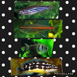 Aquarium fish to sell