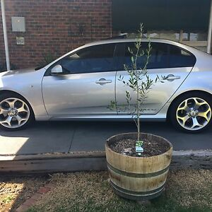 FG XR6 Turbo Watsonia North Banyule Area Preview