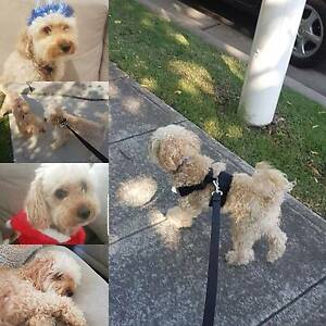 Dog Walking Services Breakfast Point Canada Bay Area Preview