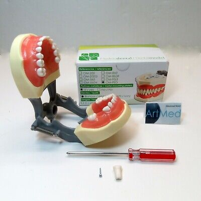 Typodont Dental Universal Plate Type Nissin 200g Pediatric Removable Teeth Usa