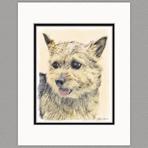 Norwich Terrier Dog Original Art Print 8x10 Matted to 11x14