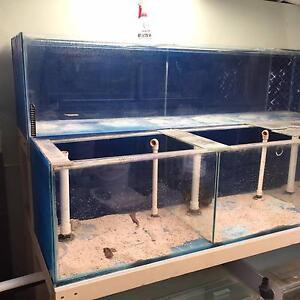 Aquarium - Breeding Set up Kilkenny Charles Sturt Area Preview