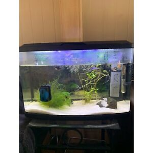 Fish tank with everything including turtle and three fish East Brisbane Brisbane South East Preview