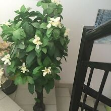 White flowers tree for sale Fairfield Fairfield Area Preview