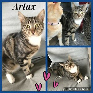 Artax - Your new best mate is waiting for you