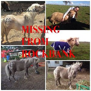 MINIATURE COLT MISSING FROM ROCKBANK Rockbank Melton Area Preview