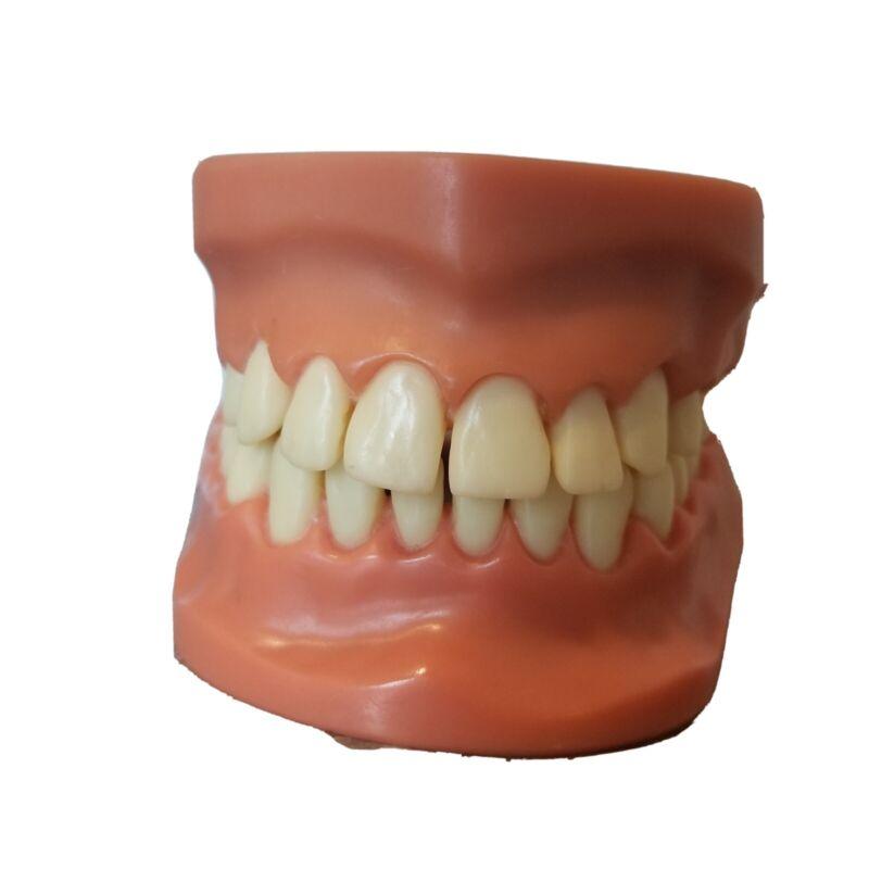 Vintage Dental Brushing Flossing Practice Teeth Model Teaching Studying Opens