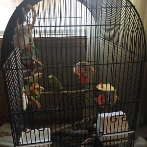 Budgie With Cage And everything