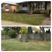 Shrub and Tree Removal/Spring Clean Up/Lawn & Garden Maintenance