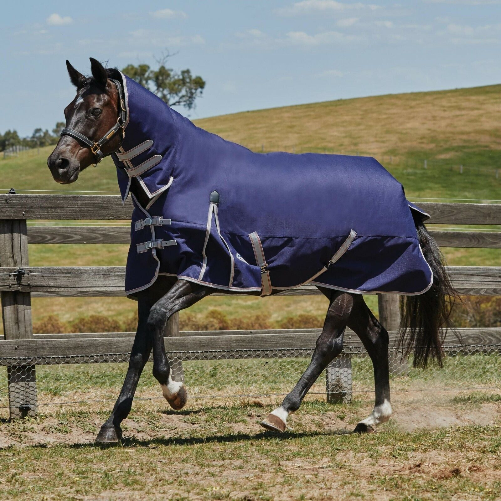 Combo Neck Lite Turnout Rug