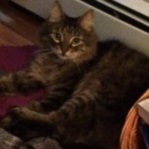 MISSING CAT - COLBY SOUTH
