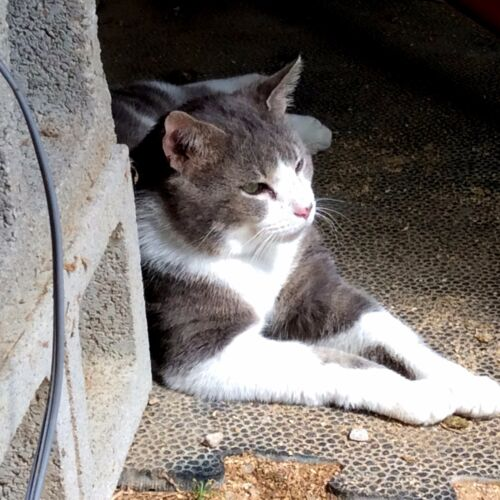 Sponsor a rescued Cat 1yr. Photo & GIFT HELP cats and kittens at shelter in KY