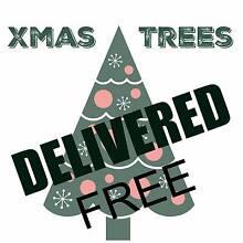 REAL 7ft Xmas Trees only $100 Leeton Leeton Area Preview