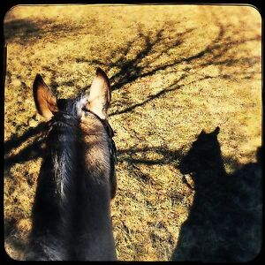 Lease a horse with us!