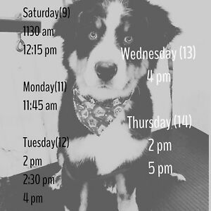 Need your dog groomed within the week?