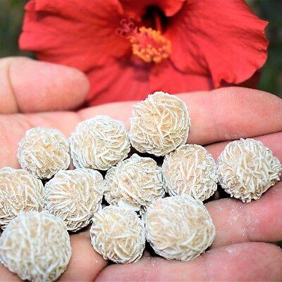 - [12] SELENITE Desert Rose Healing Crystals REIKI ENERGY - ZENERGY GEMS™ 1,200cts