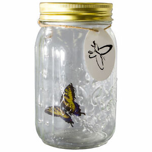 Animated Butterfly in a Jar - Yellow Swallow
