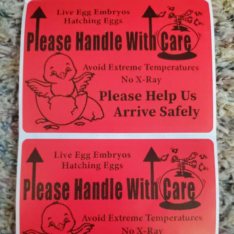 """100 Large 4"""" x 3"""" Handle with care Hatching Eggs Mailing Label sticker hand-made"""