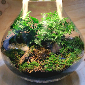 High quality terrariums for Valentine's Day Kaleen Belconnen Area Preview