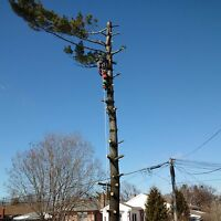 Storm clean up tree service