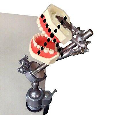 Dental Typodont Mounting Pole Fit Kilgore Nissin Columbia Dentoform Frasaco