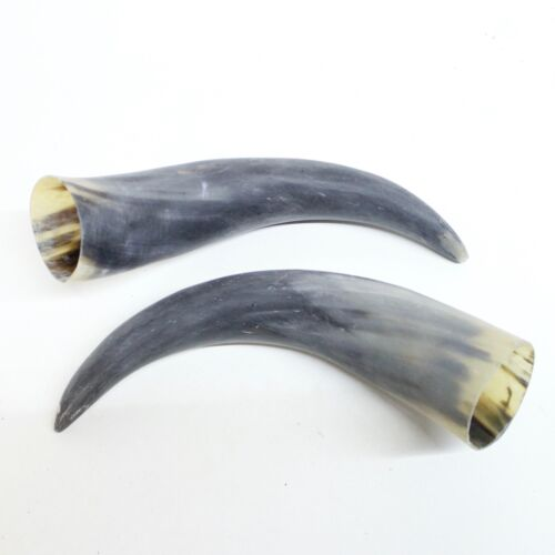 2 Raw Unfinished Cow Horns #7118 Natural Colored