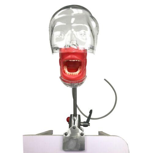 Dental Manual Manikin Simulator Phantom Head Model for Training Practice USSTOCK