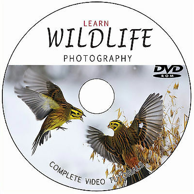 LEARN/MASTER WILDLIFE/NATURE PHOTOGRAPHY DIGITAL TRAINING VIDEO TUTORIALS ON DVD