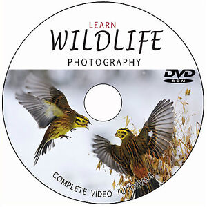 LEARN-MASTER-WILDLIFE-NATURE-PHOTOGRAPHY-DIGITAL-TRAINING-VIDEO-TUTORIALS-ON-DVD