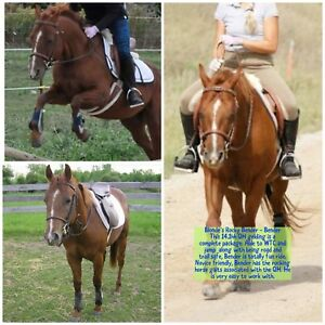 Terrific Lease Horses & Ponies Available
