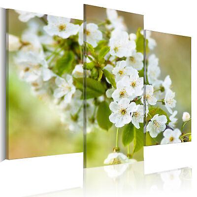 Moderne Blüte (Wandbilder xxl Blumen Kirschblüte moderne Bilder Vlies Leinwandbilder 030210-39)