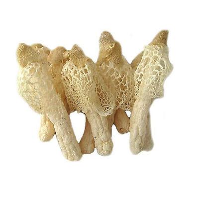 Natural Bamboo Mushrooms Fungus Dried 250g