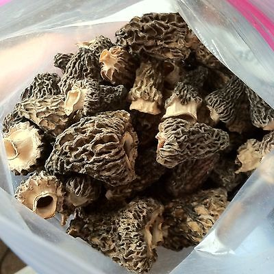 **2016 Top Grade**(1/4 Lb) Dried Idaho Morel Mushrooms