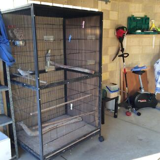 Large Aviary with Weeiros x2 Butler Wanneroo Area Preview