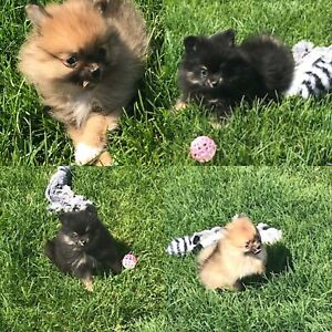 Adopt Dogs & Puppies Locally in Lethbridge | Pets | Kijiji Classifieds