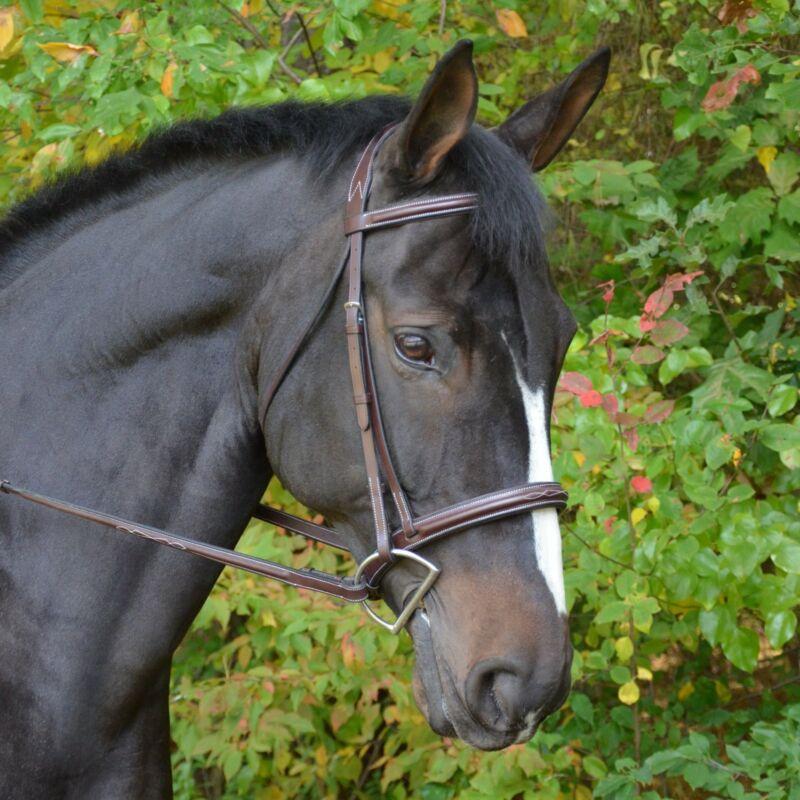 Black Oak Cyprus Hunter Bridle