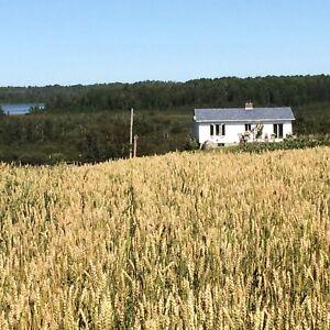 170 acre Earlton/Englehart farm/land for sale