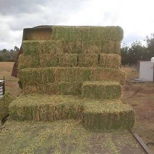 Prime Lucerne Hay good heavy bales Armidale Armidale City Preview